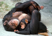 CHI 02 MC0001 01