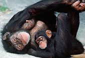 CHI 02 MC0002 01