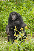 CHI 02 MC0004 01