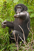 CHI 02 MC0006 01
