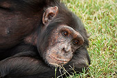 CHI 02 MC0008 01