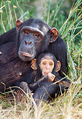 CHI 02 MH0001 01