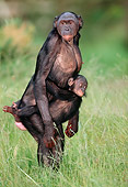 CHI 02 MH0006 01