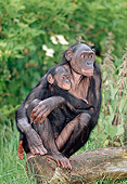 CHI 02 MH0007 01