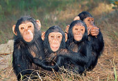 CHI 02 MH0010 01