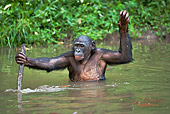 CHI 02 MH0018 01