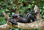 CHI 02 MH0022 01