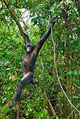 CHI 02 MH0023 01