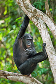 CHI 02 MH0025 01
