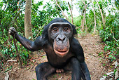 CHI 02 MH0032 01