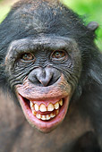 CHI 02 MH0034 01