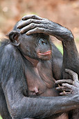 CHI 02 MH0036 01