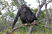 CHI 02 WF0001 01