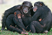 CHI 02 GR0007 01