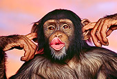 CHI 02 RK0008 02
