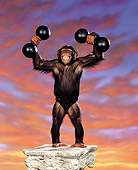 CHI 02 RK0013 02