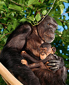 CHI 02 RK0019 12