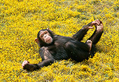 CHI 02 RK0056 01
