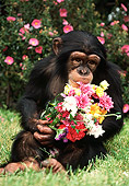 CHI 02 RK0064 13