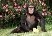 CHI 02 RK0065 07