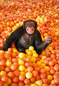 CHI 02 RK0077 15