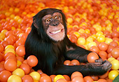 CHI 02 RK0077 24