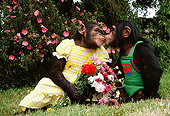 CHI 02 RK0089 17
