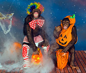 CHI 03 RK0187 01