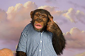 CHI 03 RK0195 01