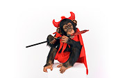CHI 03 RK0202 01