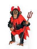 CHI 03 RK0204 01