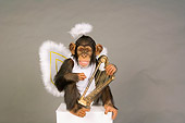 CHI 03 RK0206 01