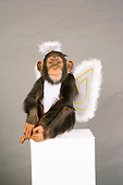 CHI 03 RK0207 01