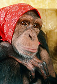 CHI 03 RC0008 01