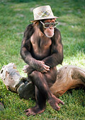 CHI 03 RC0009 01