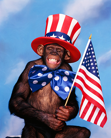 American Flag Animal Stock Photos Kimballstock