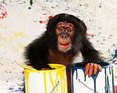 CHI 03 RK0067 04