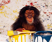 CHI 03 RK0067 12