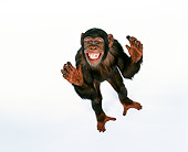 CHI 03 RK0124 02