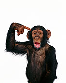 CHI 03 RK0127 01