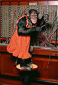 CHI 03 RK0130 07