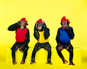 CHI 03 RK0132 01