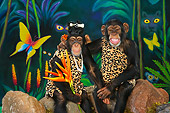 CHI 03 RK0262 01