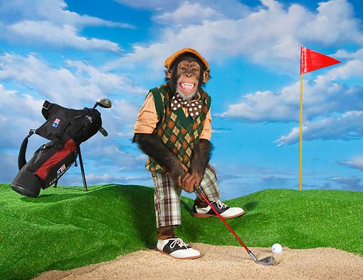 monkeys golf league