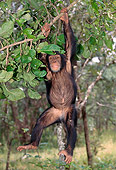 CHI 04 MH0002 01