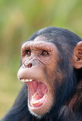 CHI 04 MH0006 01