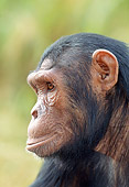 CHI 04 MH0007 01