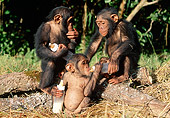 CHI 05 MH0001 01