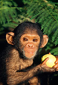 CHI 05 MH0003 01
