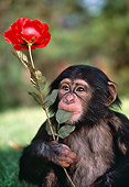 CHI 05 RK0004 01